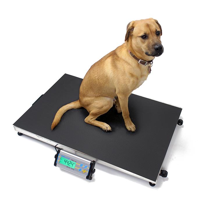Pakkevægt Adam CPWplusL. Kapacitet: 35 kg til 300 kg  Præcision: 10 g til 100 g