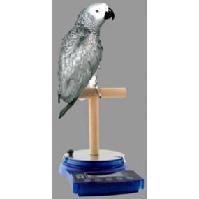Bird stang